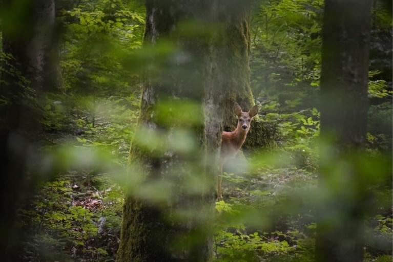 Met deze foto wint 14-jarige Drongenaar wedstrijd van National Geographic