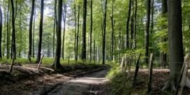 Dit is het mooiste wandelpad van Oost-Vlaanderen