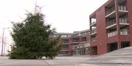 Landenaars ontevreden over te kleine kerstboom: 'Mooi voor in de living, maar niet op een plein'
