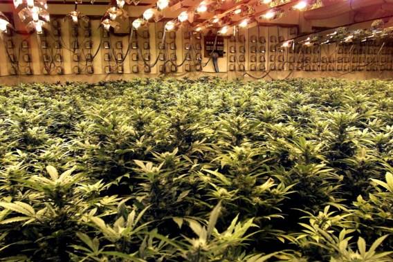 België thuishaven voor Nederlandse drugsbaronnen