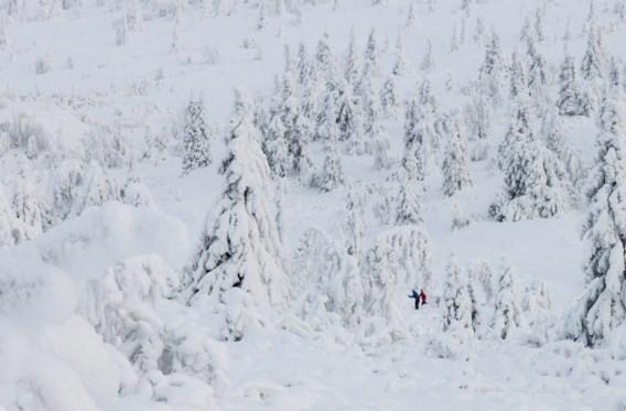 Fotograaf spot zeldzaam wit rendier in de sneeuw: 'Magisch moment'