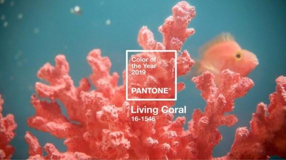 2019 zal koraal kleuren