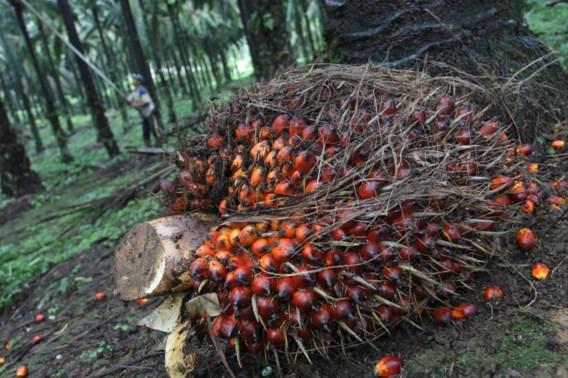 Noorwegen bant als eerste land palmolie als biobrandstof