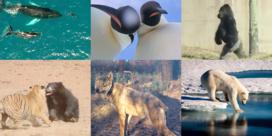 Deze dieren veroverden dit jaar de wereld