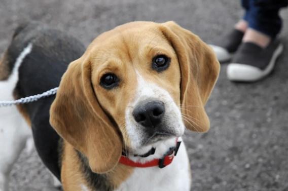 Duitse dierenasielen verbieden adopties tijdens de feestdagen: 'Bij ons zijn impulsadopties minder een probleem'