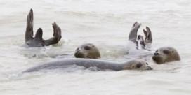 Sea Life vangt zeehondenpup op kerstdag