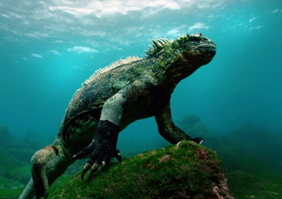 Galapagoseilanden verbieden vuurwerk om ecosysteem te beschermen