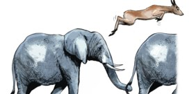 Gazellen zeldzamer dan olifanten en muizen