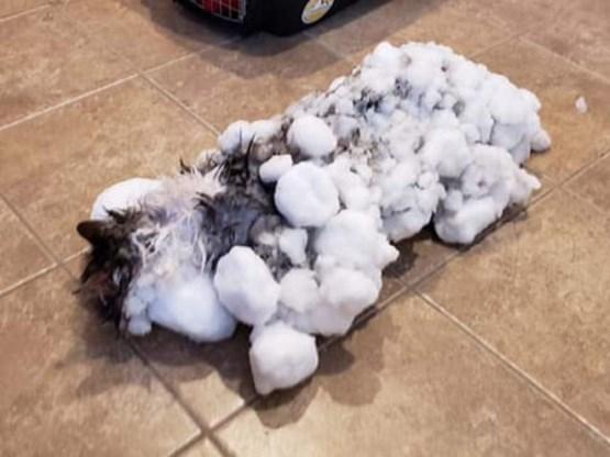 Bevroren kat die 'tot leven is gewekt' gaat viraal