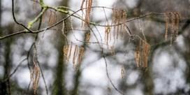 Het pollenseizoen is gestart, met eerste piek door els en hazelaar