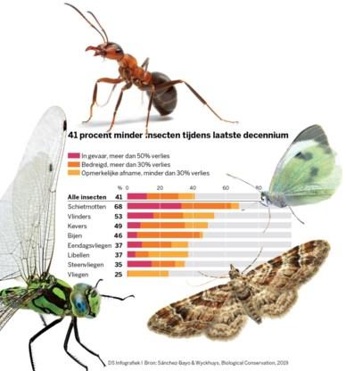 Eerst verdwijnen de insecten, dan de rest
