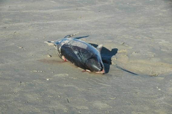 Recordaantal dolfijnen aangespoeld aan Franse Atlantische kust