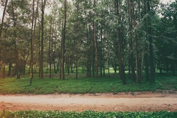 Vlaanderen krijgt eerste 'tiny forest' in Oudenaarde