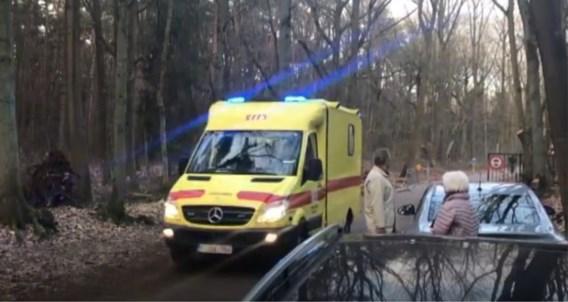 Fietser gewond na aanvaring met everzwijn in Bokrijk