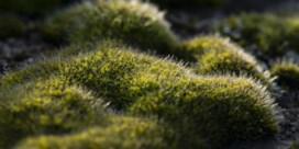 Mos, een groene kanarie in de koolmijn