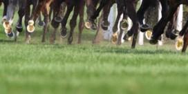 Gedopeerde paarden in Belgische stallen