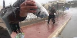 Op Malta vallen de vissen gewoon uit de lucht op straat
