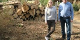 Letterzetter velt 180 bomen