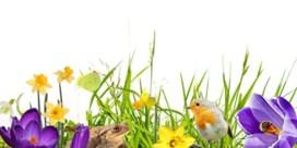 De lente doet het fel, maar de natuur die volgt nog wel