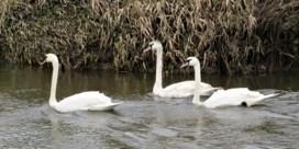 Waterkwaliteit in Vlaanderen zakt dieper weg