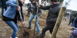 Vrijwilligers planten ruim 22.000 bomen