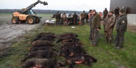 Meer dan 1.600 evers doodgeschoten in Vlaanderen vorig jaar