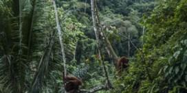 Palmolie hoort niet langer in de brandstoftank