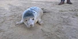Zieltogende zeehond zal het halen en heeft voortaan een naam
