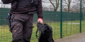 Explosieven-hond Billy versterkt politie