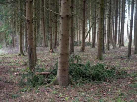 Helft gekapte bomen niet opnieuw aangeplant