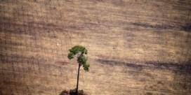 Te veel bos sneuvelt voor onze import