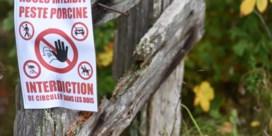 Luxemburg bouwt wegens varkenspest hek aan Belgische grens
