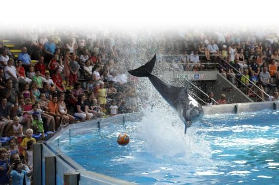Burgemeester over dolfijnen Seapark: 'Is panda's kweken in Pairi Daiza dan ook onverantwoord?'