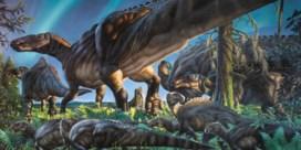 Dinododer op heterdaad betrapt