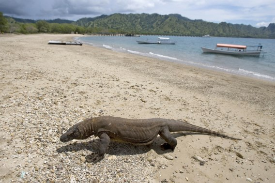 Indonesië zet 'drakeneiland' Komodo jaar lang op slot