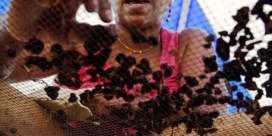 DNA uit speeksel koppelt oude tabakspijp aan slavin