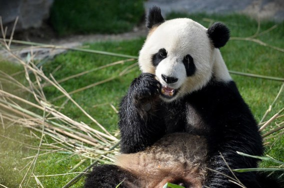 Beste dierentuin van Europa vind je in België