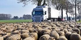 Limburgse schapenboeren betogen tegen de wolf