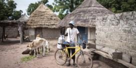 Europese melk overspoelt West-Afrika