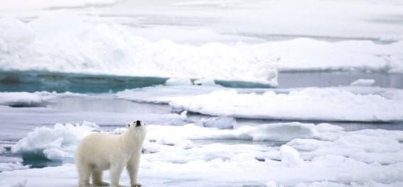 Help! De Noordpool smelt nu al drie keer sneller dan voorheen
