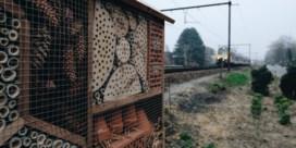 Hoe de spoorweg de bij kan redden