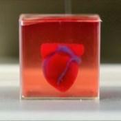 Primeur: onderzoekers printen voor het eerst kloppend hart met 3D-printer
