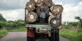 Generaal van Kabila verkoopt stuk regenwoud aan Chinezen