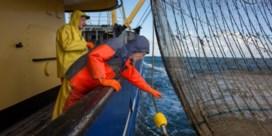 Europees verbod op pulsvissen definitief goedgekeurd