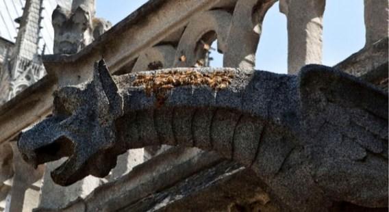 De bijen van Notre-Dame overleefden de brand