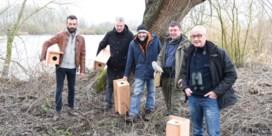 Vrijwilligers Natuurpunt registreren 115 steenuilen