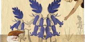 Het dilemma: ga ik naar de hyacinten kijken in het Hallerbos?