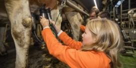 Lezersvraag: is rauwe melk van de boer veilig en gezond?