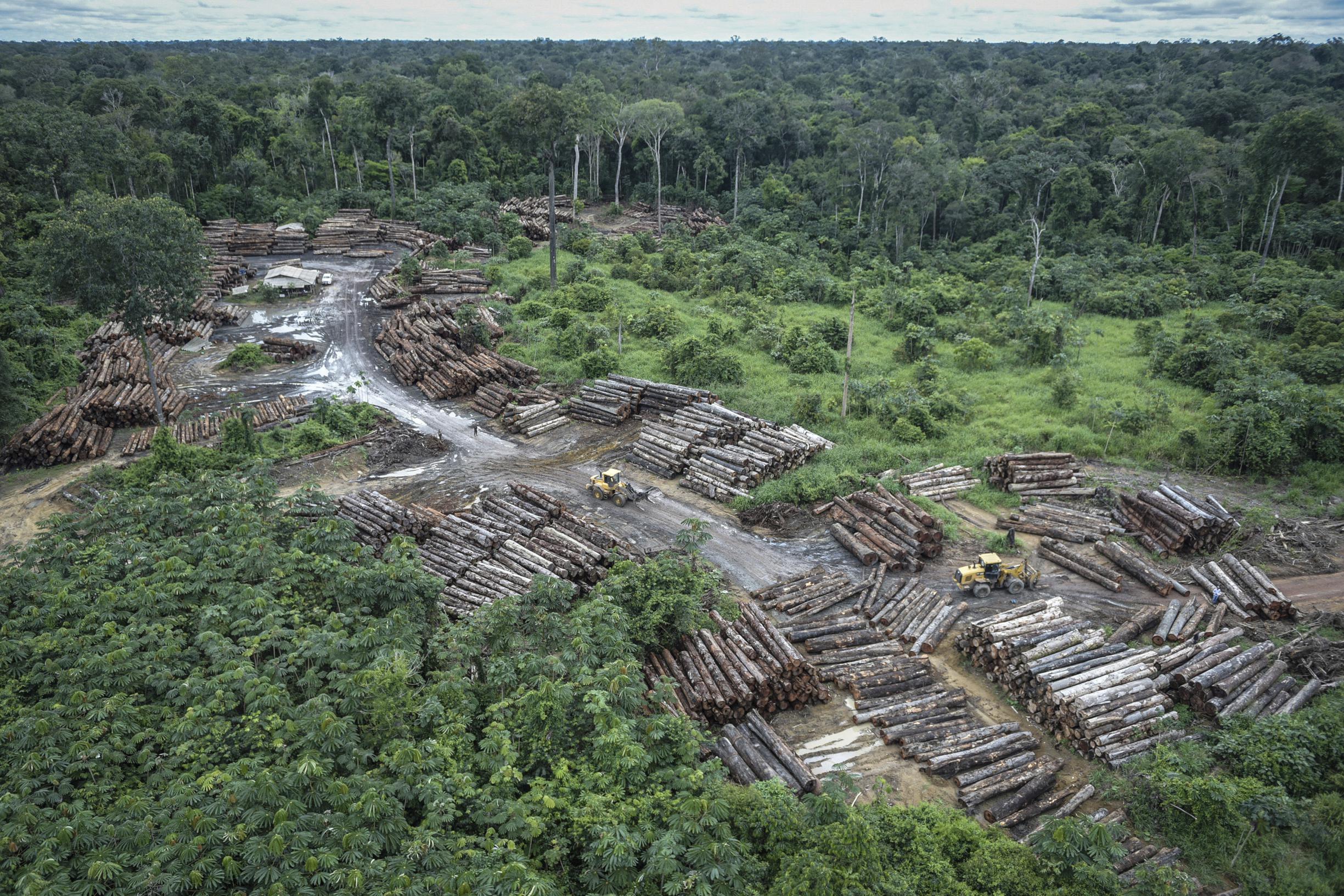 Verwonderlijk Tropisch woud ligt op spoed' - De Standaard Mobile AX-14