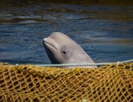 Traint Rusland witte walvissen om vissers aan te vallen?